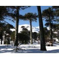 Corralco ski 3 terrenos en venta 5000m2 uni
