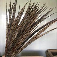pluma de cuello redondo, pluma de faisán